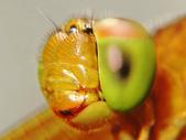 微距世界:蜻蜓