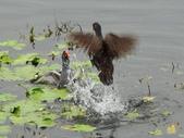 生態世界:鳥松溼地 2