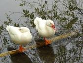 生態世界:鳥松溼地 3