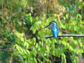 生態世界:2月13日鳥松溼地 5