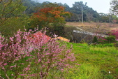 山河變色:IMG_6655 .JPG