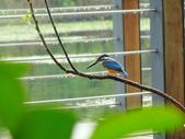 生態世界:2月13日鳥松溼地 7
