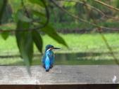 生態世界:2月13日鳥松溼地 3