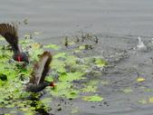 生態世界:鳥松溼地 7