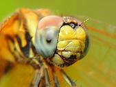 微距世界:蜻蜓(笑一個拍張照)