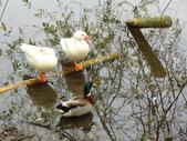 生態世界:鳥松溼地 5