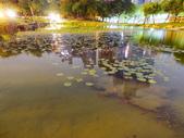 夜景 原生植物園:原生植物園