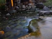 夜景 原生植物園:DSC04990.JPG