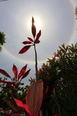 太陽光環~日暈:IMG_9286日暈.JPG