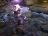 夜景 原生植物園:DSC06629.JPG