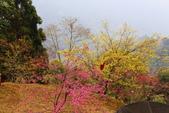 山河變色:IMG_6645 .JPG