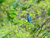 生態世界:2月13日鳥松溼地 8