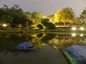 夜景 原生植物園:靜止的水面