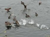 生態世界:鳥松溼地 6