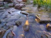 夜景 原生植物園:DSC05074.JPG
