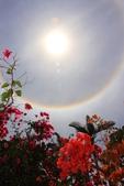 太陽光環~日暈:IMG_9220日暈.JPG