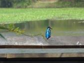 生態世界:2月13日鳥松溼地 6