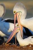 花鳥集:20140520-14.jpg