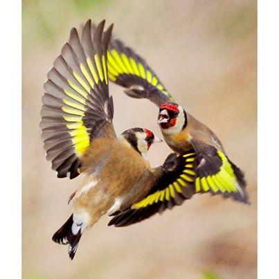 花鳥集:birds29.jpg