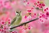 花鳥集:20140801-7.jpg