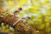 花鳥集:20140520-20.jpg