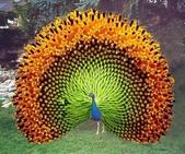 花鳥集:鳥中之王2.jpg