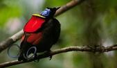 花鳥集:20140801-5.jpg