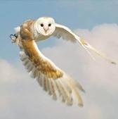 花鳥集:展翅飛姿2.jpg