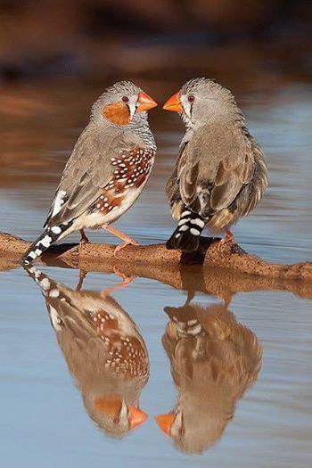 花鳥集:birds37.jpg