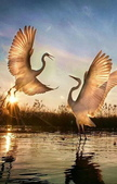 花鳥集:仙鳥34.jpg