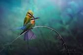 花鳥集:20140801-2.jpg