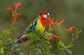 花鳥集:20140801-13.jpg
