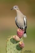 花鳥集:20140801-15.jpg