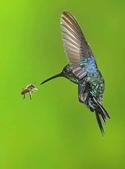 花鳥集:展翅飛姿12.jpg