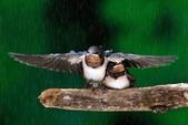 花鳥集:20140801-21.jpg