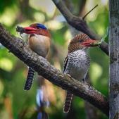 花鳥集:20140402-3.jpg