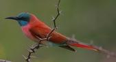花鳥集:20140801-4.jpg