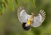 花鳥集:20140402-6.jpg