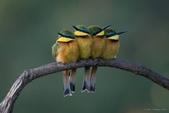 花鳥集:20140801-23.jpg
