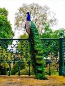 花鳥集:鳥中之王8.jpg