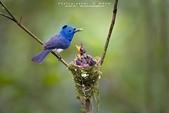 花鳥集:20140402-8.jpg