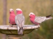 花鳥集:20140402-9.jpg