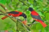 花鳥集:20140601-1.jpg