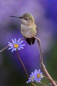 花鳥集:20140801-11.jpg