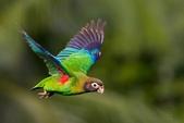 花鳥集:20140402-10.jpg