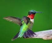 花鳥集:20140801-3.jpg