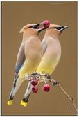 花鳥集:20140801-12.jpg