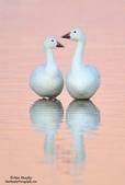 花鳥集:20140801-18.jpg