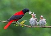 花鳥集:20140402-11.jpg