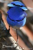 花鳥集:罕见的鸟-20.jpg